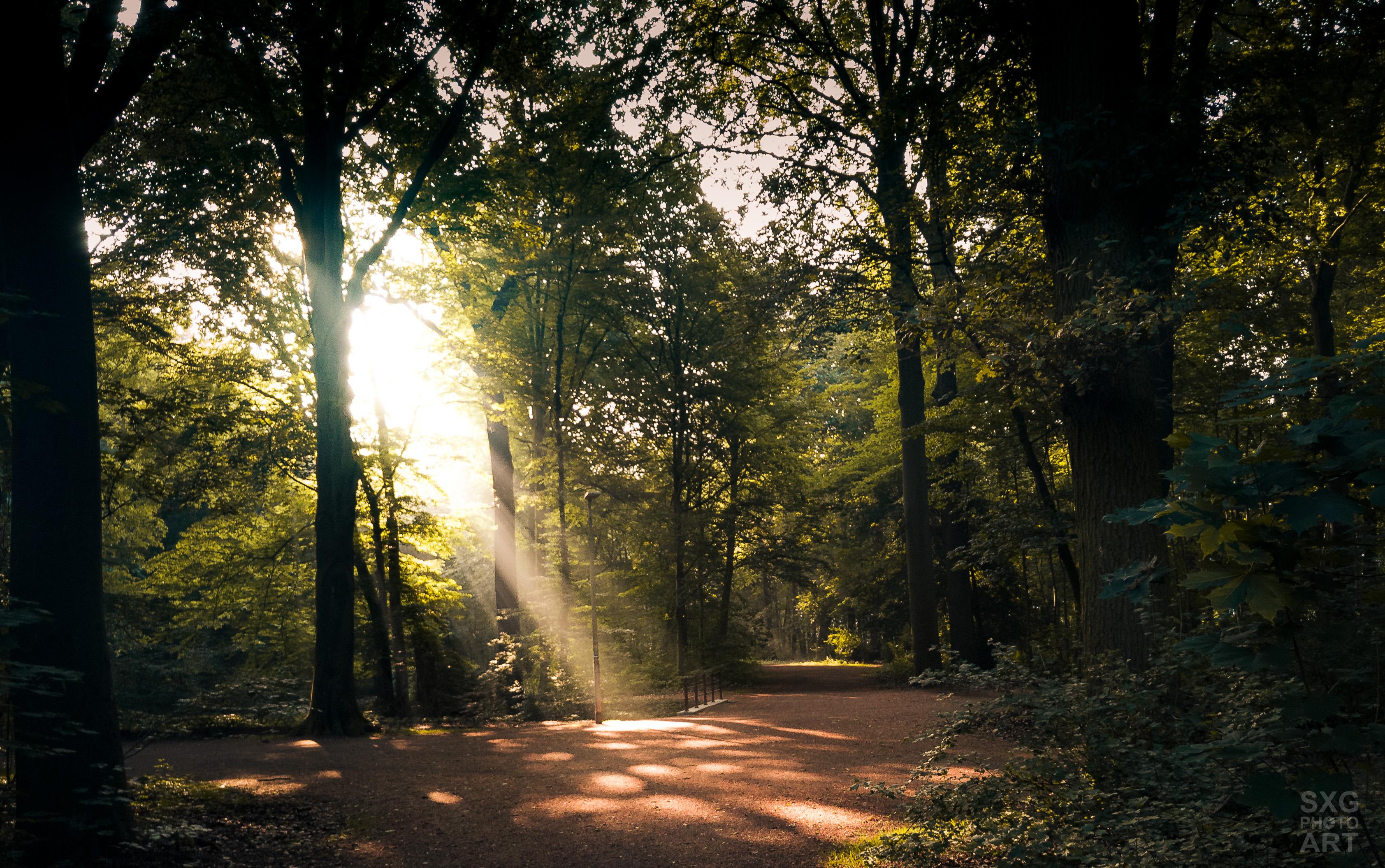 Die Eilenriede in Hannover am frühen Morgen